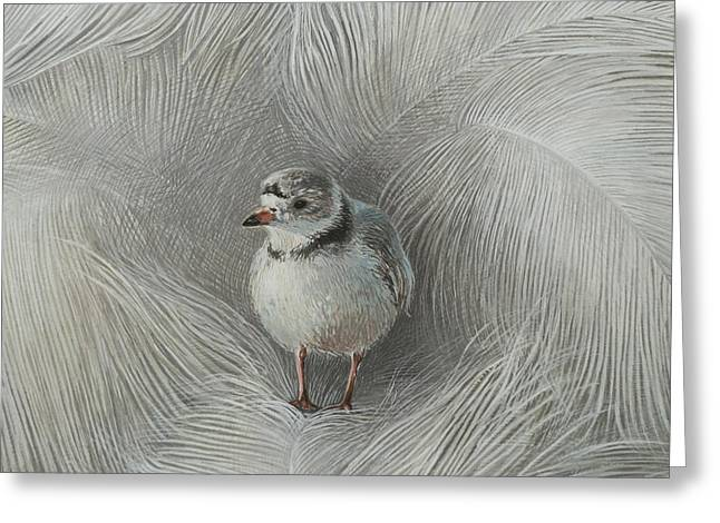Recently Sold -  - Sea Animals Greeting Cards - Piping Plover Greeting Card by Ezartesa