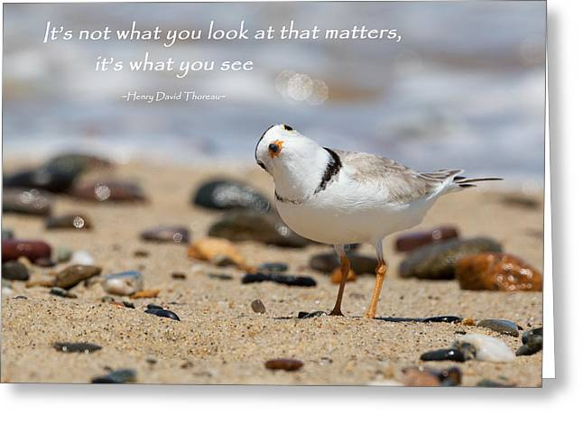 Piping Plover Quote Greeting Card by Bill Wakeley