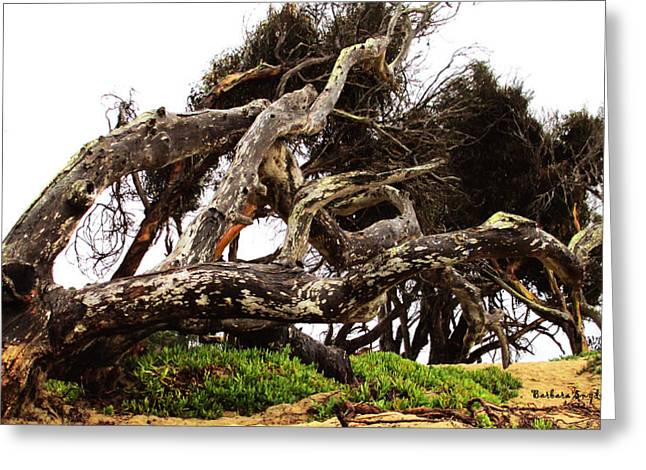 Gnarly Digital Greeting Cards - Pismo Beach Tree Greeting Card by Barbara Snyder