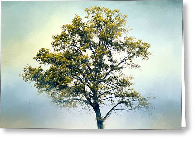 Artistic Photography Greeting Cards - Pistachio Cotton Field Tree - Landscape Greeting Card by Jai Johnson