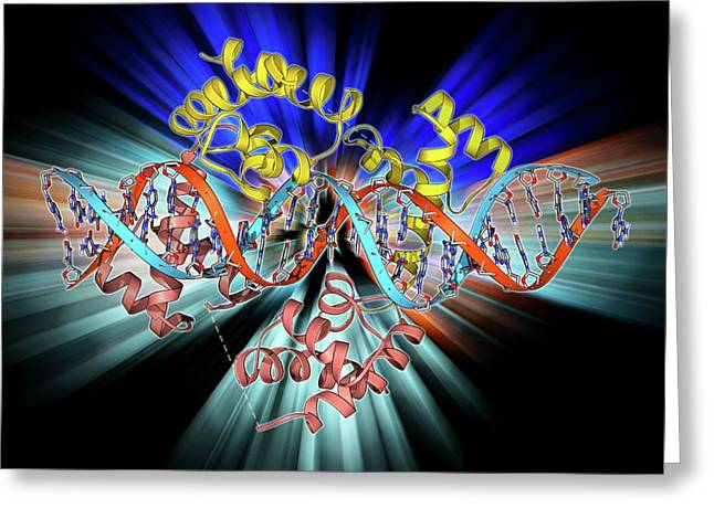 Pit-1 Transcription Factor Bound To Dna Greeting Card by Laguna Design