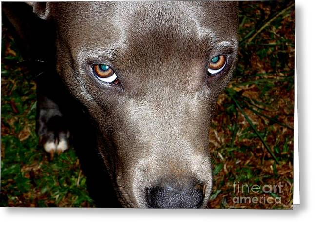 Kauai Dog Greeting Cards - Pit Bull - 1 Greeting Card by Mary Deal
