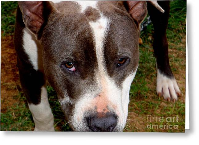 Kauai Dog Greeting Cards - Pit Bull - 2 Greeting Card by Mary Deal