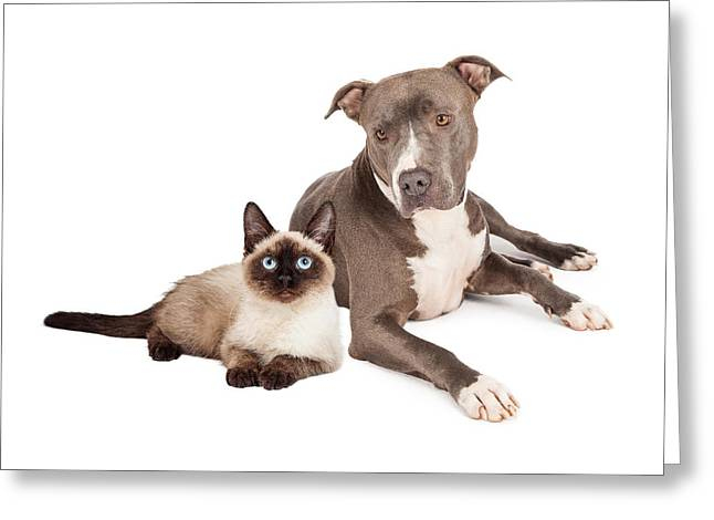Pit Bull Dog And Siamese Cat Greeting Card by Susan  Schmitz