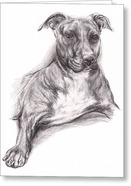 Pit Bull Portrait In Charcoal Greeting Card by MM Anderson