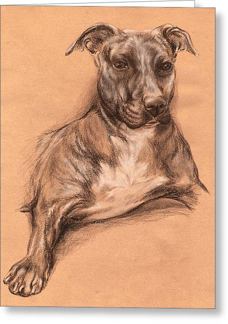 Bully Mixed Media Greeting Cards - Pit Bull Portrait - Tea Dyed Charcoal Greeting Card by MM Anderson