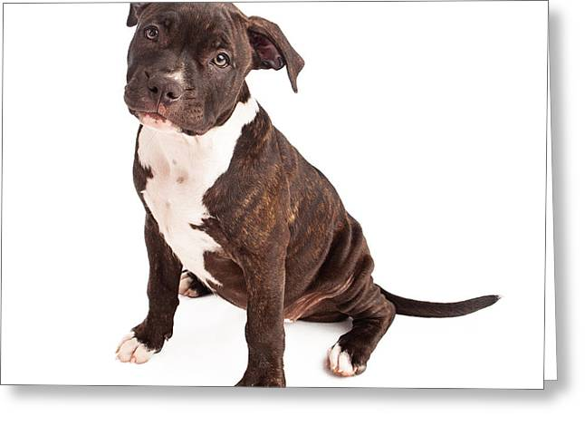 Guard Dog Greeting Cards - Pit Bull Puppy Black and White Greeting Card by Susan  Schmitz