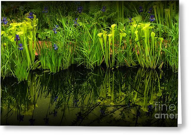 Pitcher Plant Paradise Greeting Card by Mike Nellums