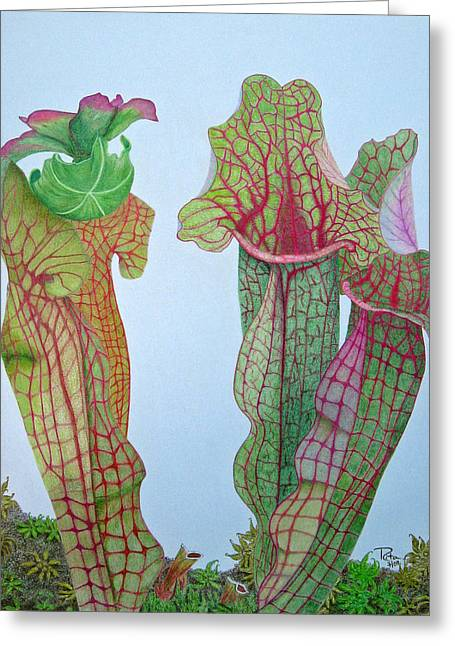 Pitcher Drawings Greeting Cards - Pitcher Plant - Sarracenia Greeting Card by Rita Omark
