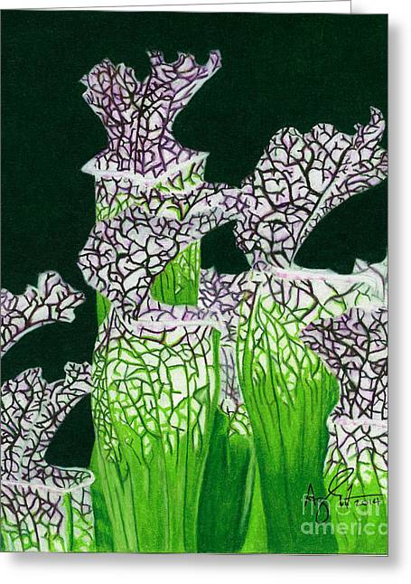 Pitcher Drawings Greeting Cards - Pitcher Plant Greeting Card by Troy Argenbright