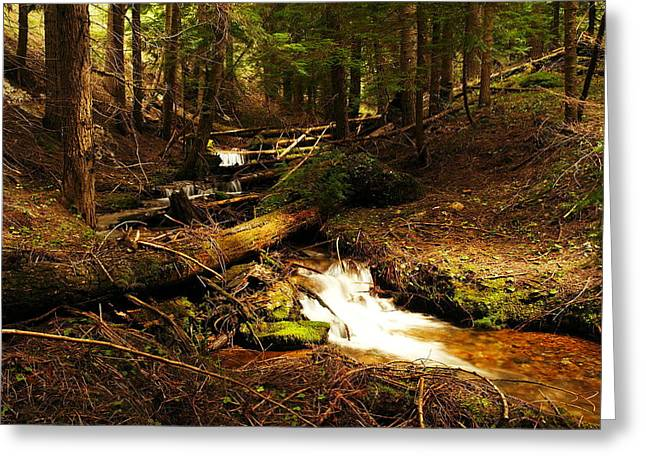 North Idaho Greeting Cards - Placer Creek Greeting Card by Jeff  Swan