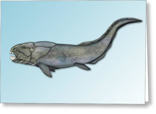 Fossil Art Greeting Cards - Placoderm, Extinct Fish Greeting Card by Gwen Shockey