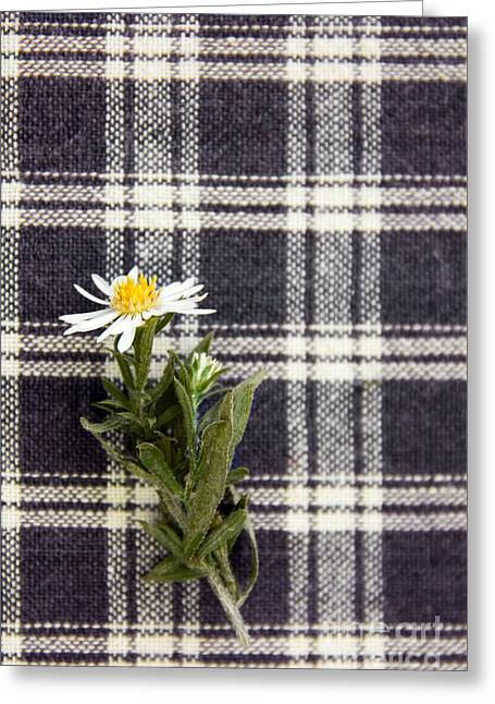Table Cloth Greeting Cards - Plaid Beauty Greeting Card by Margie Hurwich