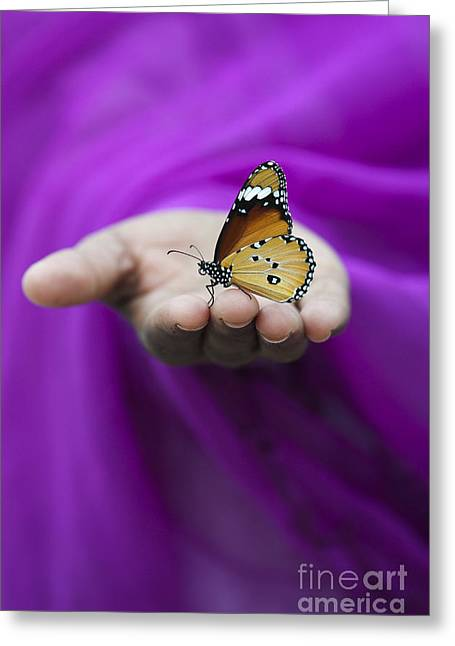 Common Tiger Butterfly Greeting Cards - Plain Tiger Butterfly Greeting Card by Tim Gainey