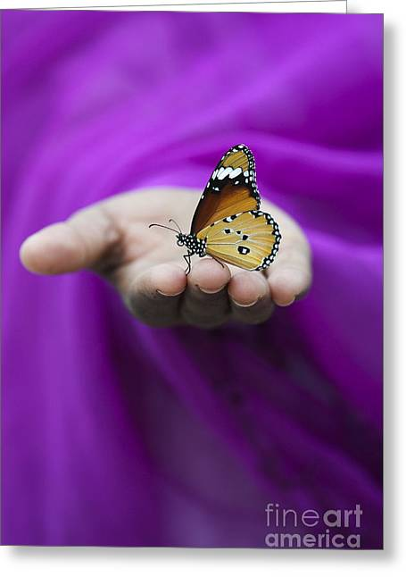 Plain Tiger Butterfly Greeting Card by Tim Gainey