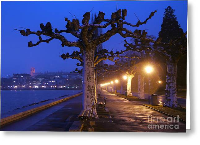 World Destination Photographs Greeting Cards - Plane Trees And Lake Geneva, Vevey Greeting Card by Adam Sylvester