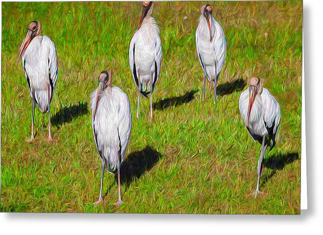 Zoology Greeting Cards - Planet of the Woodstorks Greeting Card by John Bailey