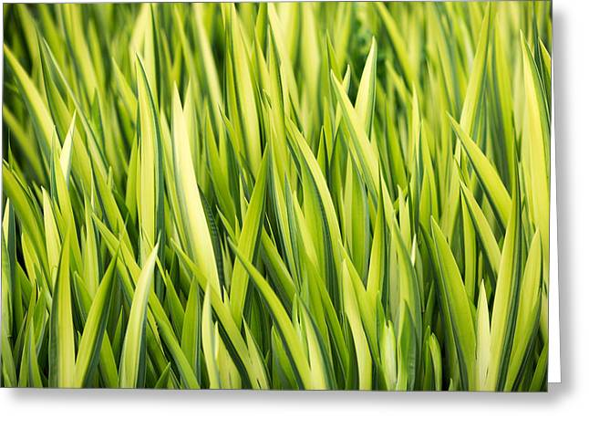 Plant Abstract 1 Greeting Card by Rebecca Cozart