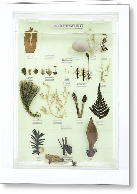 Label Greeting Cards - Plant Group Specimens, Artwork Greeting Card by Gregory Davies / Medinet Photographics