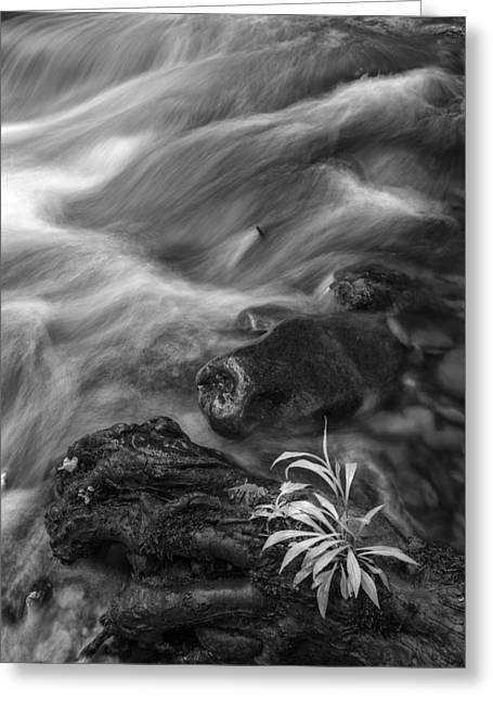 Smokey Mountains Greeting Cards - Little Plant Greeting Card by Jon Glaser