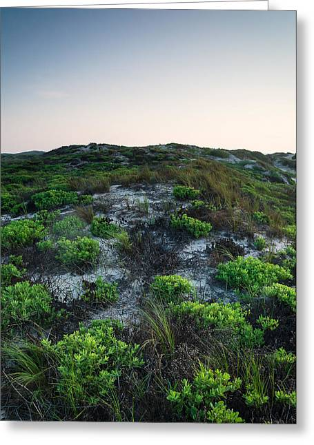 Texas Greeting Cards - Plant life along the shore Greeting Card by Ellie Teramoto