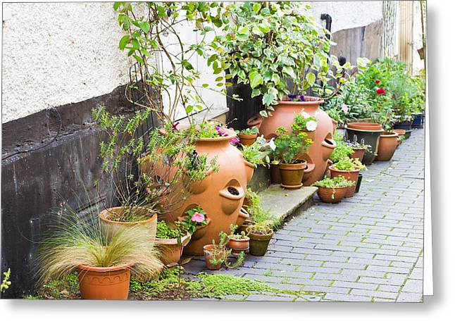Beauty Greeting Cards - Plant pots Greeting Card by Tom Gowanlock