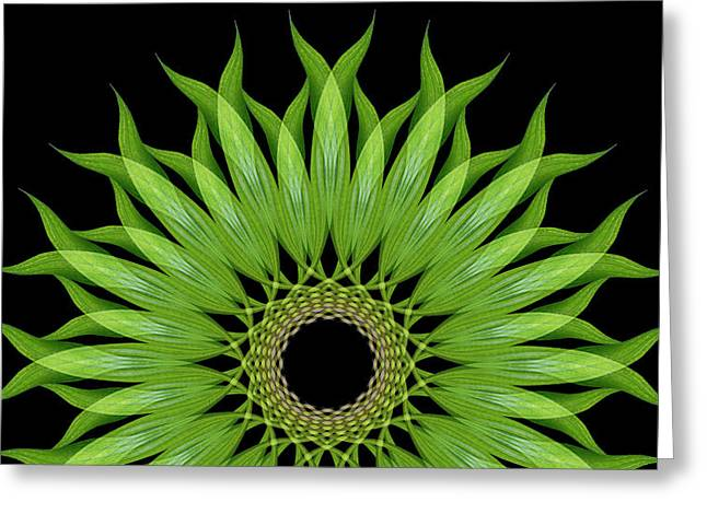 Esotericism Greeting Cards - Plantago Leaf Greeting Card by Ilse Geitmann