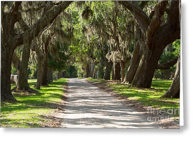 Old South Greeting Cards - Plantation Road Greeting Card by Louise Heusinkveld