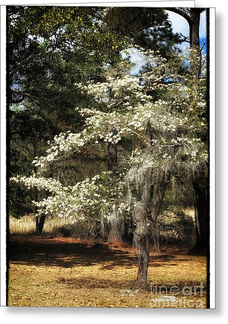 Old School Houses Greeting Cards - Plantation Tree Greeting Card by John Rizzuto