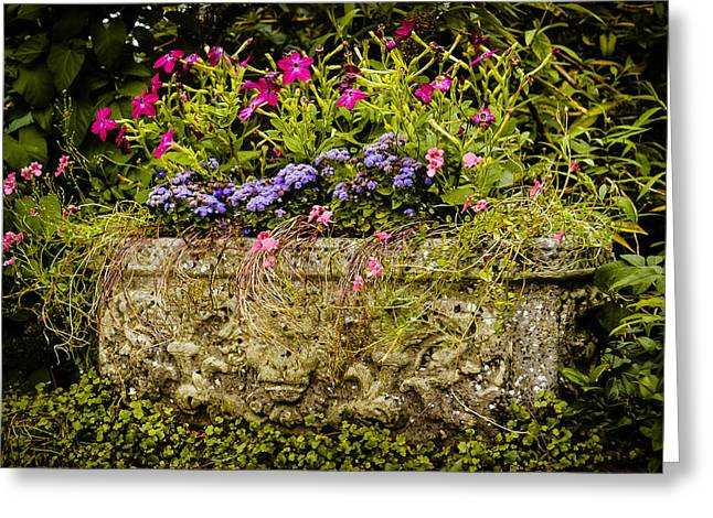 Concrete Planter Greeting Cards - Planter Greeting Card by Mark Llewellyn