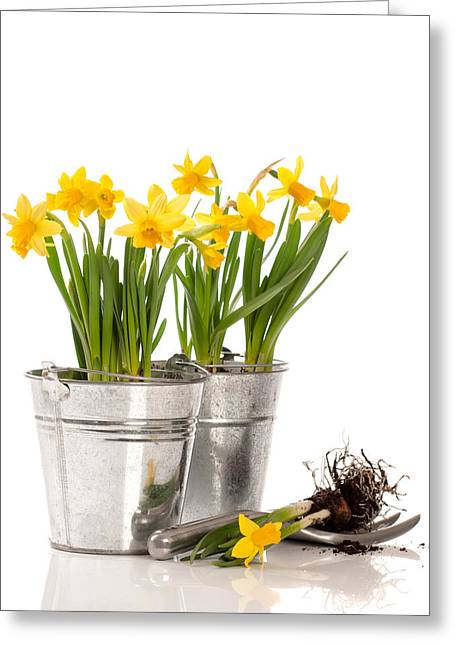 Gardening Tools Greeting Cards - Planting Bulbs Greeting Card by Amanda And Christopher Elwell