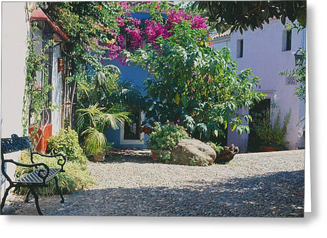 Plants At A House, Marbella, Costa Del Greeting Card by Panoramic Images