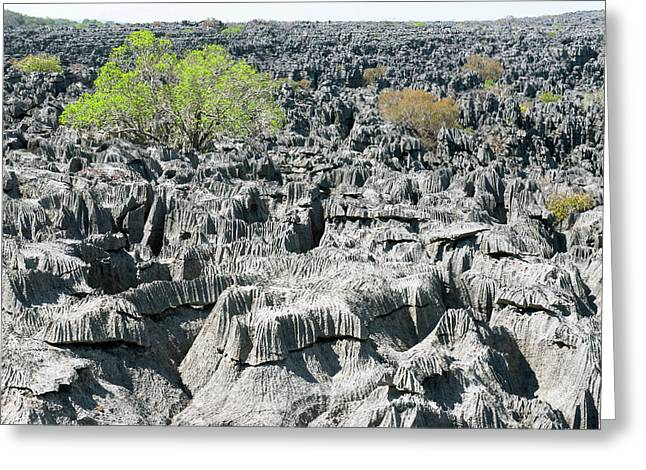 Plants Growing On Limestone Rocks Greeting Card by Dr P. Marazzi