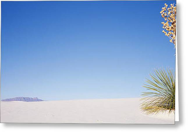 Sand Pattern Greeting Cards - Plants In A Desert, White Sands Greeting Card by Panoramic Images