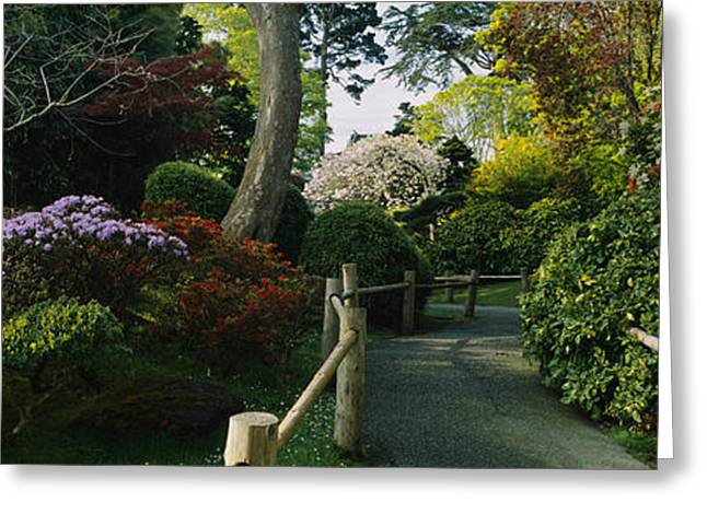 Tea Tree Flower Greeting Cards - Plants In A Garden, Japanese Tea Greeting Card by Panoramic Images