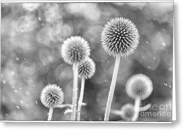 Front Room Digital Art Greeting Cards - Plants in the Rain Greeting Card by Natalie Kinnear