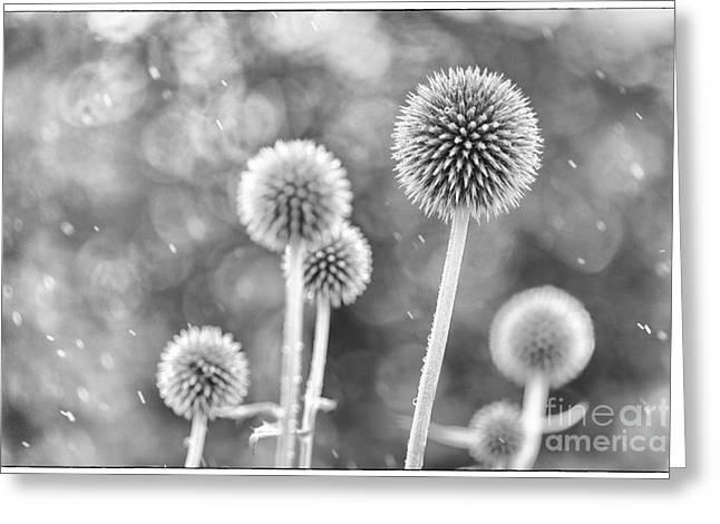 Plants in the Rain Greeting Card by Natalie Kinnear