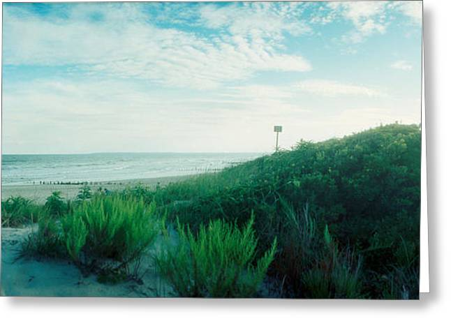 Beach Photography Greeting Cards - Plants On The Beach, Fort Tilden Beach Greeting Card by Panoramic Images
