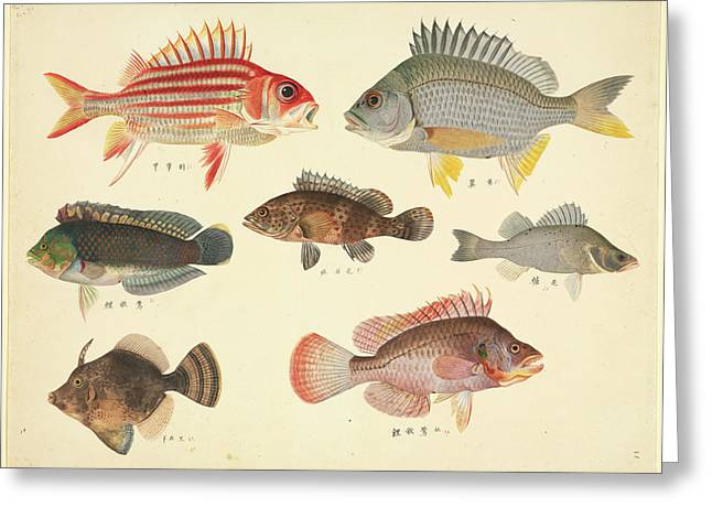 Plate 110: John Reeves Collection Greeting Card by Natural History Museum, London