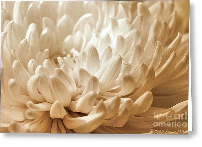 Susan Smith Greeting Cards - Platinum Mum Greeting Card by Susan Smith