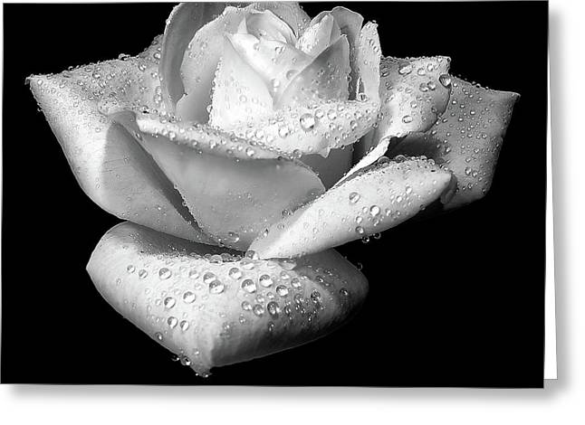Rain Drop Greeting Cards - Platinum Rose Flower Greeting Card by Jennie Marie Schell