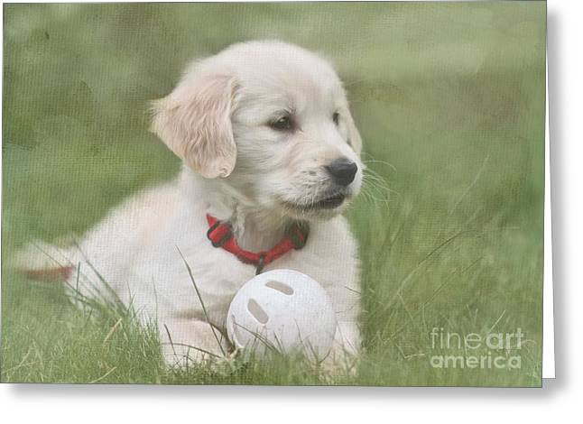 Puppy Digital Art Greeting Cards - Play Ball Greeting Card by Jayne Carney