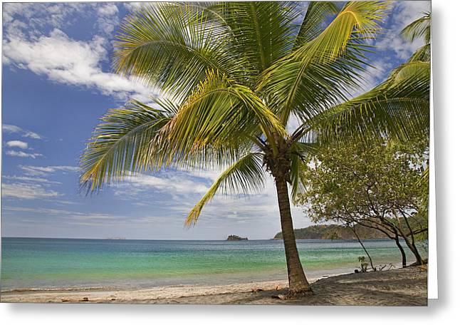 Tim Fitzharris Greeting Cards - Playa La pencca in Costa Rica Greeting Card by Tim Fitzharris