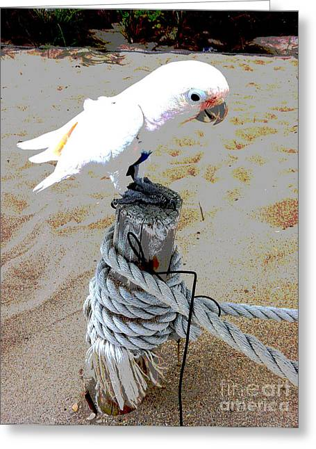 Danielle Perry Photographs Greeting Cards - Playa Parrot Greeting Card by Danielle  Perry