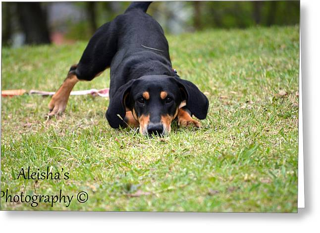 Lucky Dogs Greeting Cards - Playful Greeting Card by Aleisha Gates
