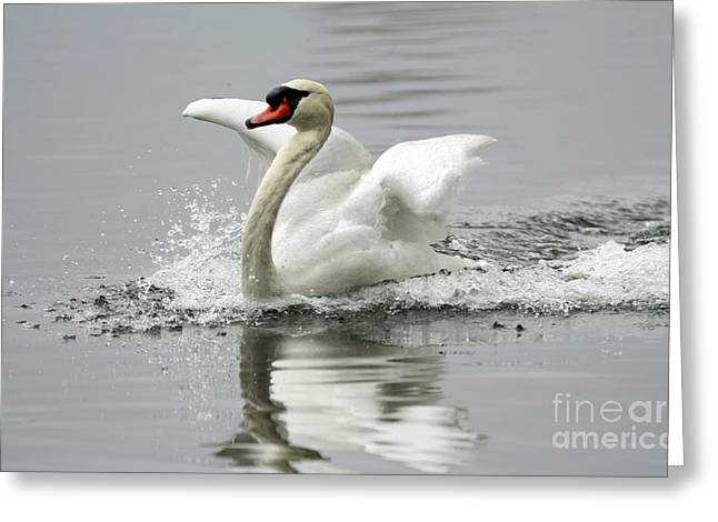 Shelley Myke Greeting Cards - Playful at the Lake Greeting Card by Inspired Nature Photography By Shelley Myke