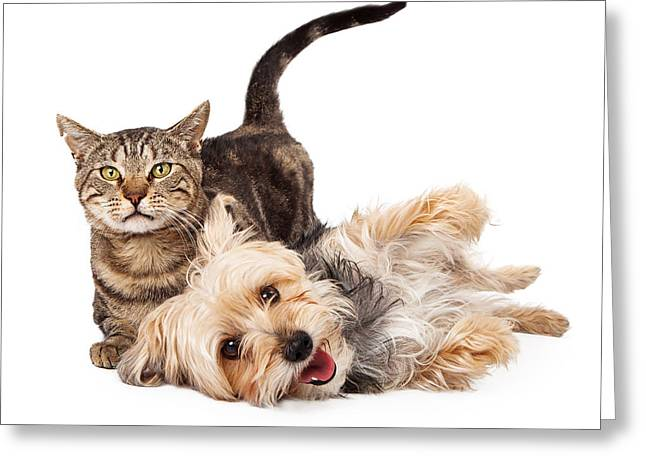 Cute Animal Portraits Greeting Cards - Playful Dog and Cat Laying Together Greeting Card by Susan  Schmitz