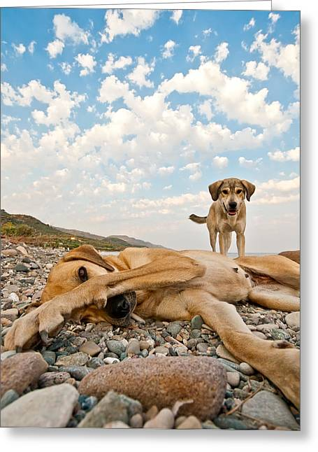Ocean Mammals Greeting Cards - Playful Dogs On The Beach Greeting Card by Leyla Ismet