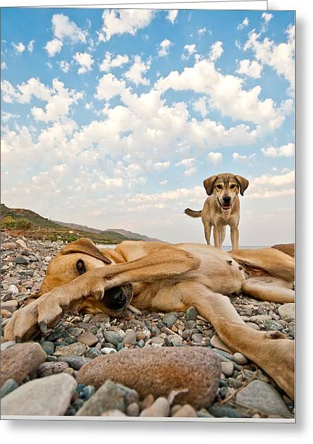 Playful Dogs On The Beach Greeting Card by Leyla Ismet