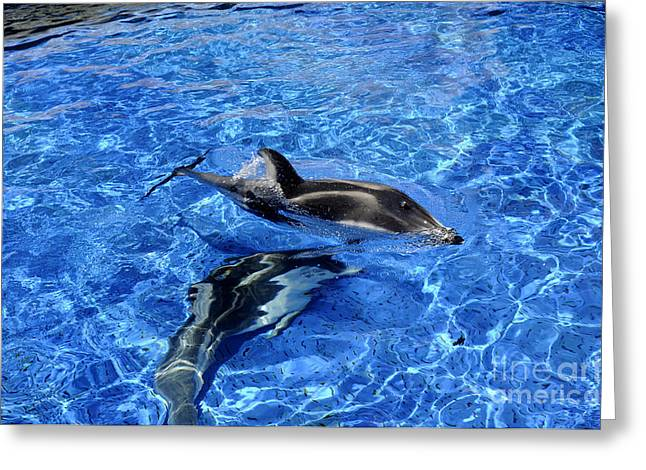 Jellyfish Pool Greeting Cards - Playful Dolphins Greeting Card by Brenda Kean